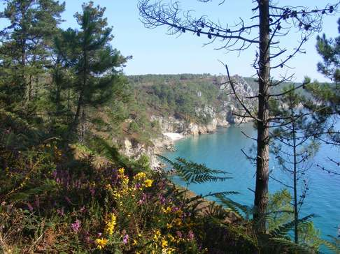 Gorse, heather and pine seem more vividly coloured against the backdrop of milky sea on the Crozon peninsula